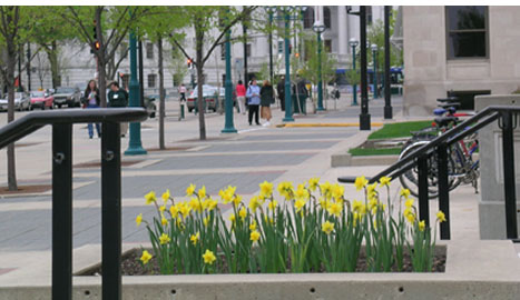 Subject: Daffodils in front of Madison Municipal Building; Location: Madison, WI; Date: 2005; Photographer: Carrie Scherpelz